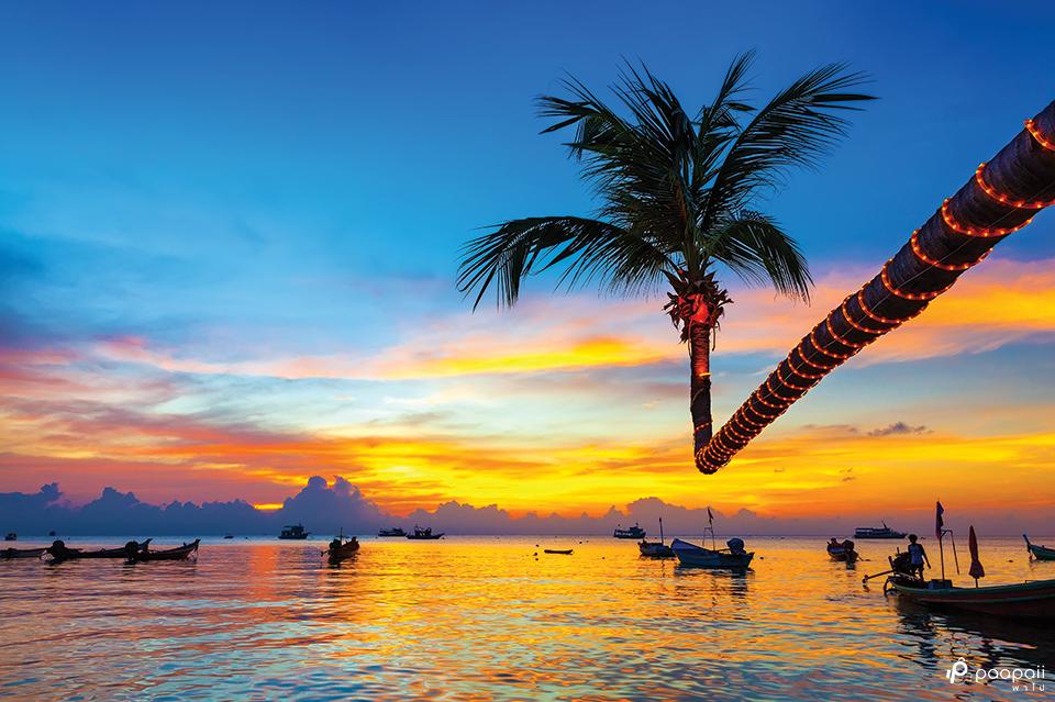เกาะเต่า1