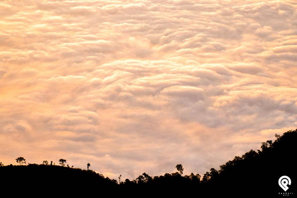 """""""เชียงราย"""" 4 วัน 3 คืน ภูชี้ฟ้า - ภูชี้ดาว - ดอยผาตั้ง"""