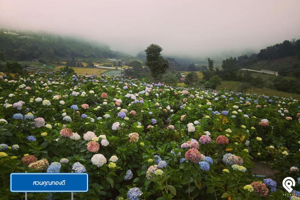 พาไปชิล 7 พิกัดถ่ายรูป ทุ่งดอกไม้ @ เชียงใหม่